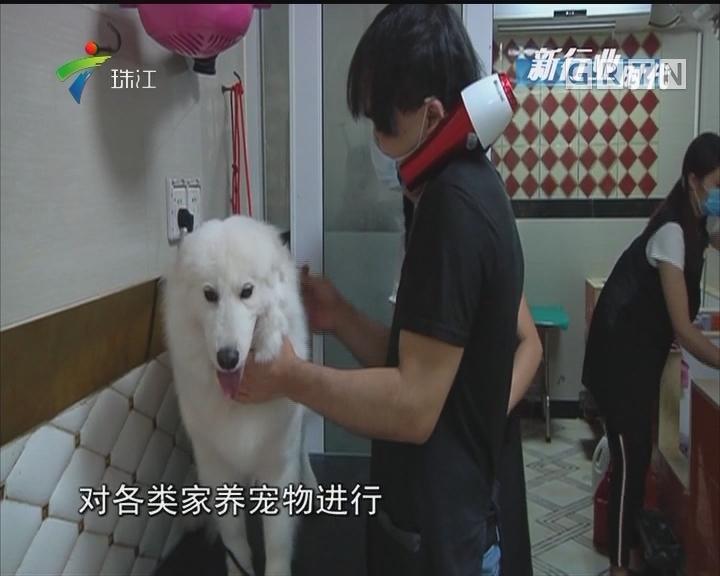 宠物美容师:专业护理不亚于人类