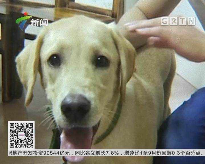 广州花都警方:打掉盗贩狗团伙 救出数十狗只