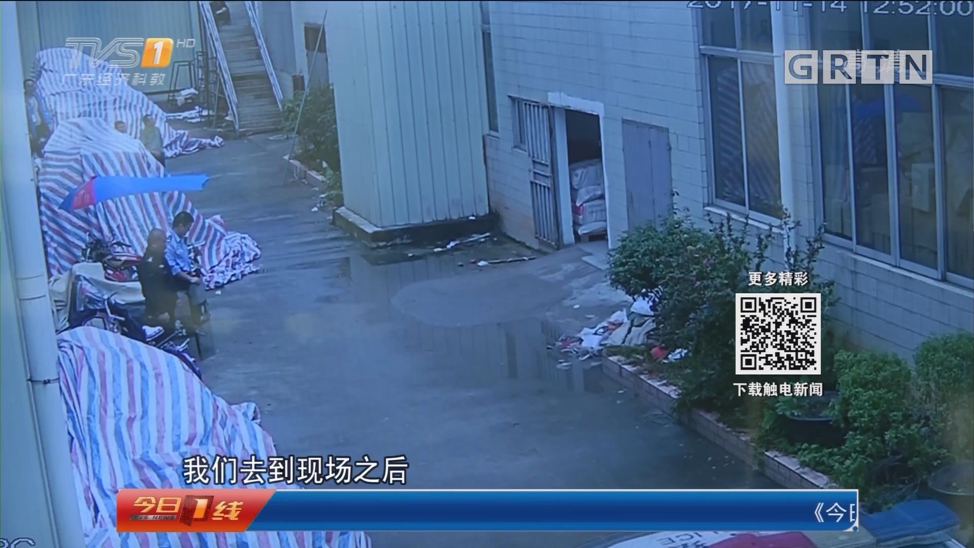 广州花都:流浪藏獒闯入工厂伤人被击毙