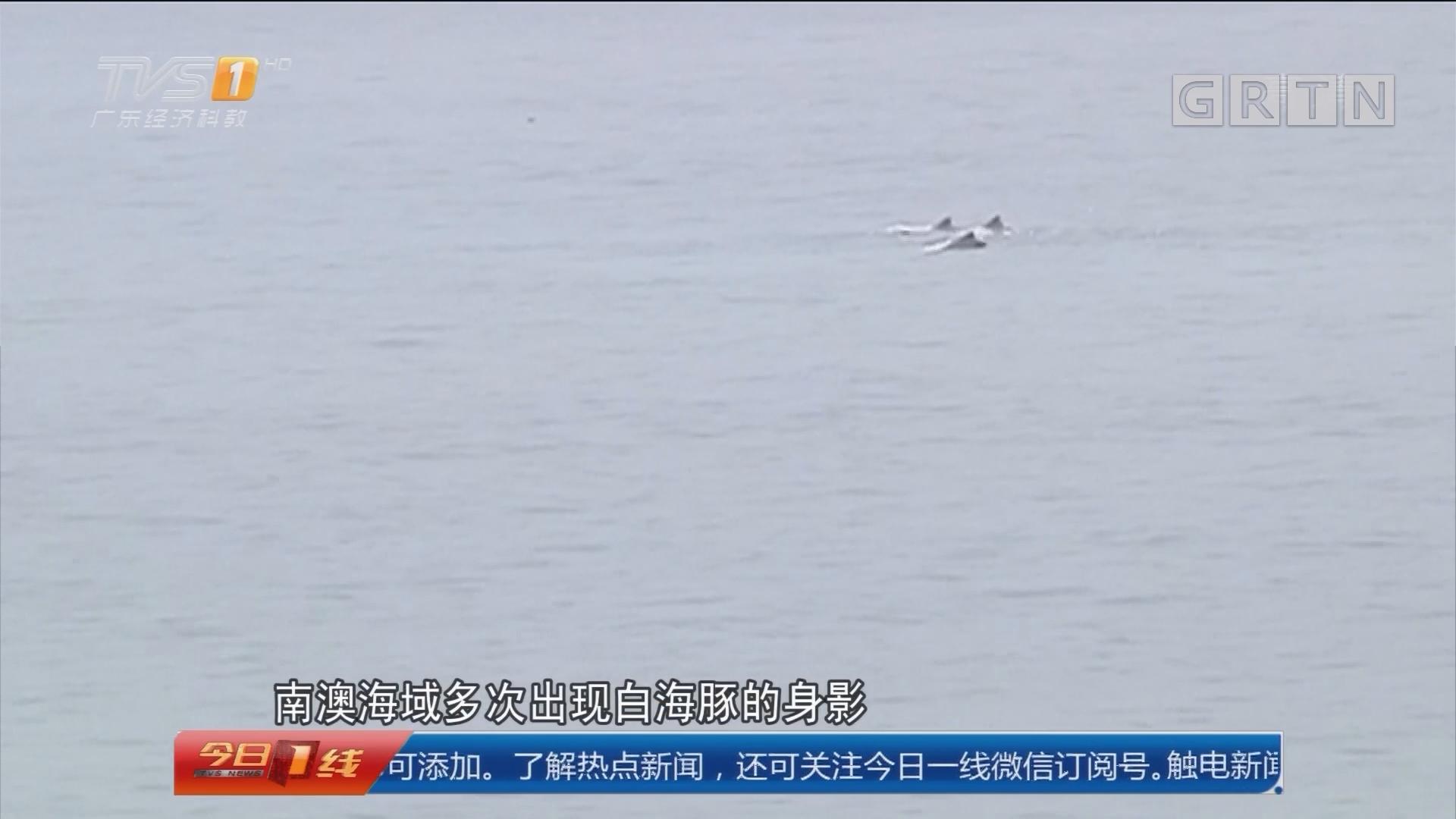 汕头:东海岸海域 喜现白海豚