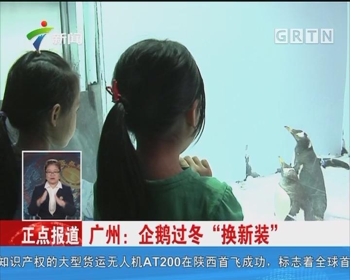 """广州:企鹅过冬""""换新装"""""""