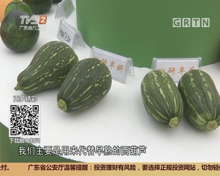 广东种博会:新型南瓜品种 南瓜还是西葫芦?