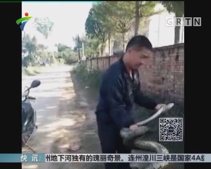 惠州:蟒蛇频繁出现 村民忧心仲仲