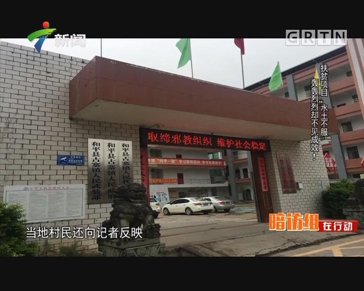 """[2017-12-25]社会纵横:扶贫项目""""水土不服"""" 轰轰烈烈却不见成效!"""