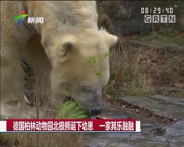 德国柏林动物园北极熊诞下幼崽 一家其乐融融
