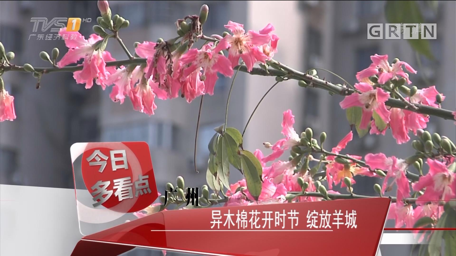 广州:异木棉花开时节 绽放羊城