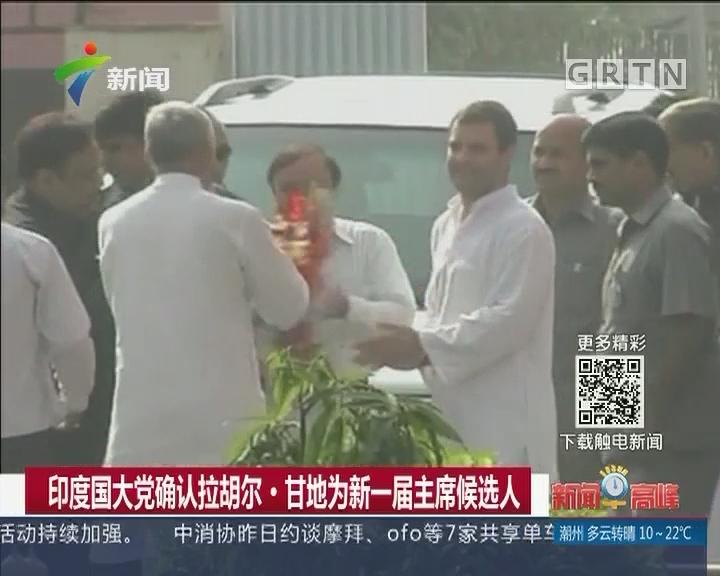 印度国大党确认拉胡尔·甘地为新一届主席候选人