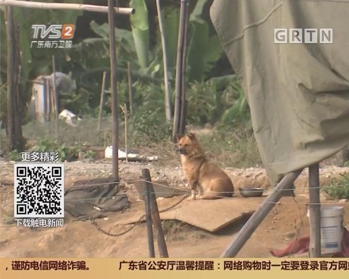 顺德:犬只频失踪 有贼流窜偷狗!