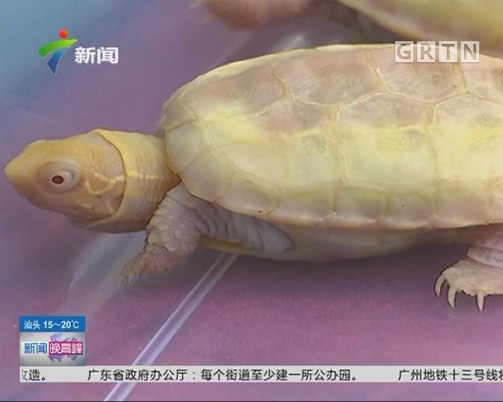 """佛山:百万宠物龟被盗 竟是""""家贼""""难防"""