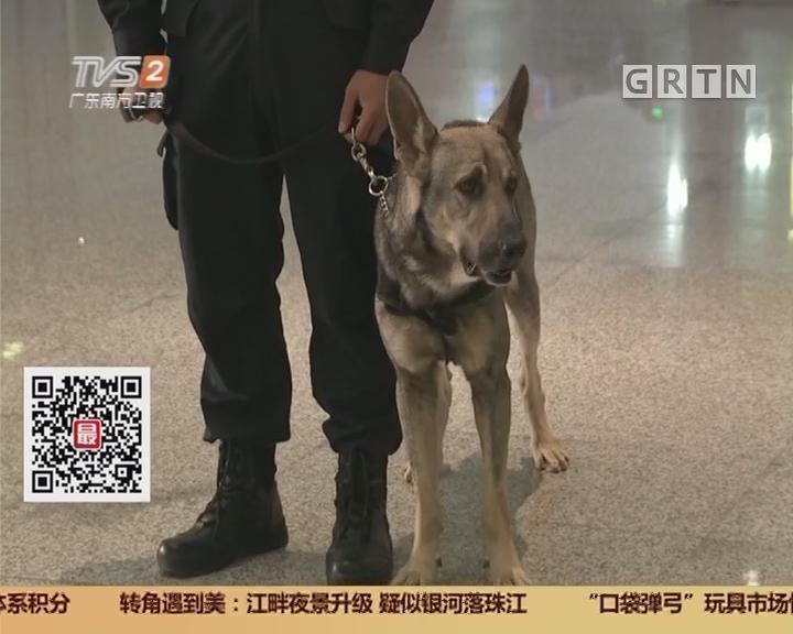 """南海警犬训练基地:身形矫健 """"战虎""""的新兵生活"""