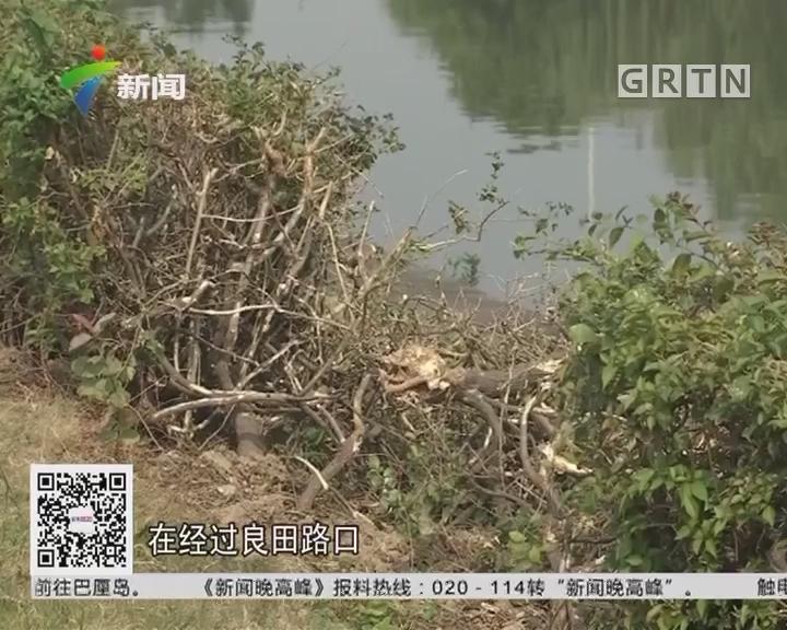广东顺德:汽车开入河涌 三名被困者获救
