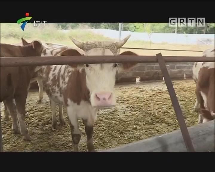 [2017-12-04]摇钱树:深山里的牛场