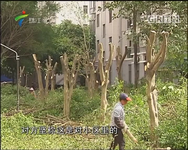从化:小区逾百棵树遭过度修剪 林业部门介入