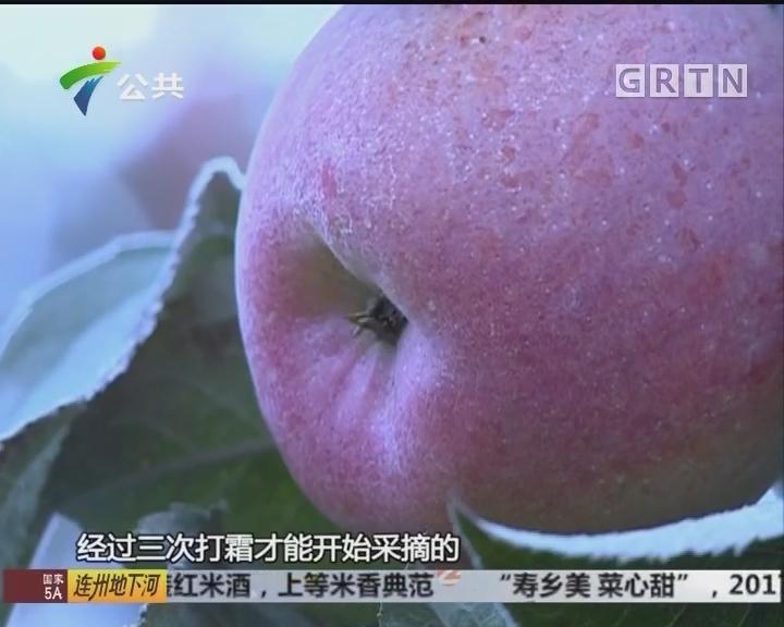 """""""糖心风暴""""来袭 秋冬适宜吃阿克苏苹果"""