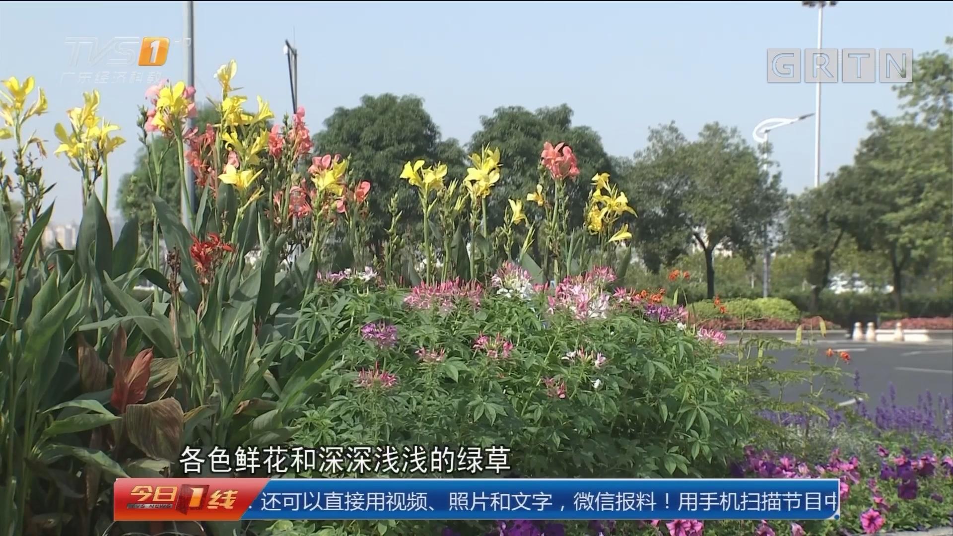 广州:鲜花争奇斗艳 美景共赏