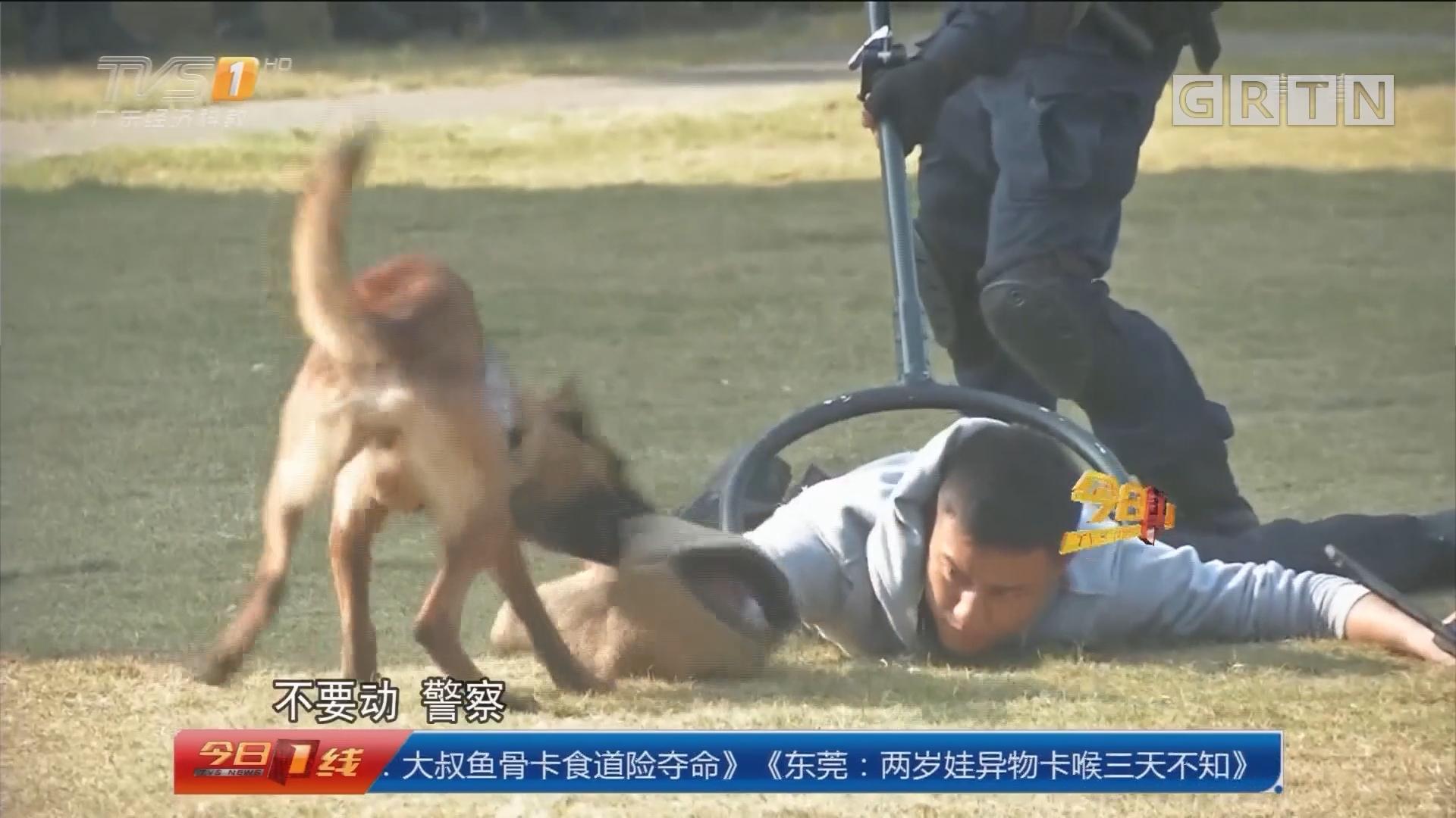深圳公安:精英警犬 技能大比拼
