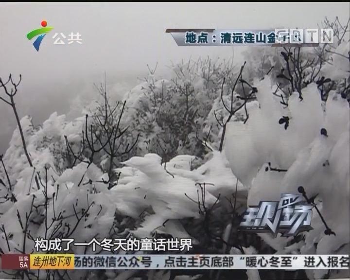 """清远金子山下""""雪"""" 气象专家称是雾凇"""