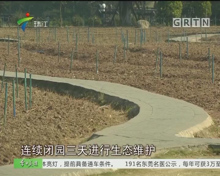 """追踪:""""花海""""变""""荒漠"""" 广州海珠湖闭园重整"""