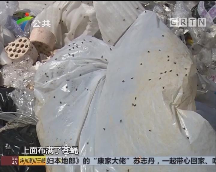 顺德:逢简工业区垃圾占路 苍蝇满天飞