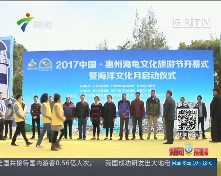 广东惠东举办海龟文化节