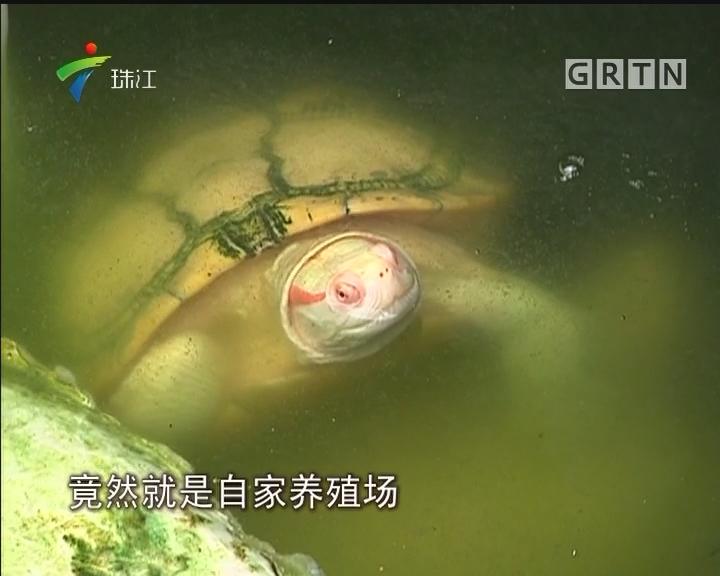 佛山:百万宠物龟被盗 原是内鬼所为