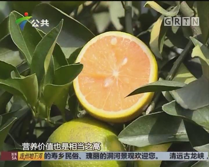 海南热带水果新贵:白沙红心橙正当时