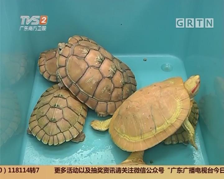 佛山:谁偷龟蛋 价值上百万