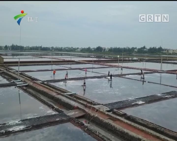 千年盐田、海底花园 成湛江滨海游新名片