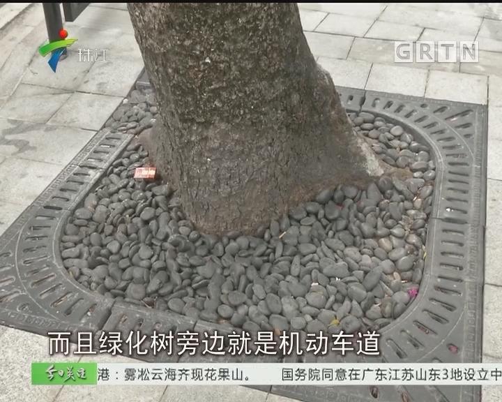 广州:绿化树根铺鹅卵石 市民心忧存隐患