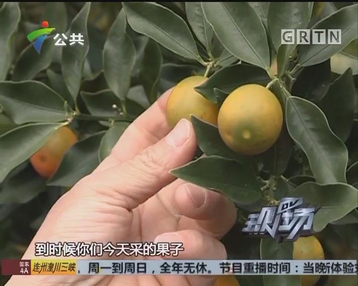 退伍军人林俊合:用军人的态度严控水果品质