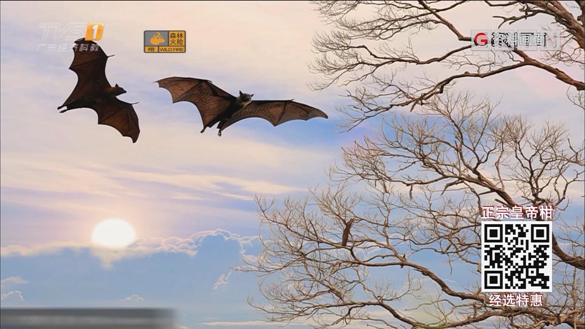 新华社:SARS冠状病毒始作俑者找到了?是蝙蝠?