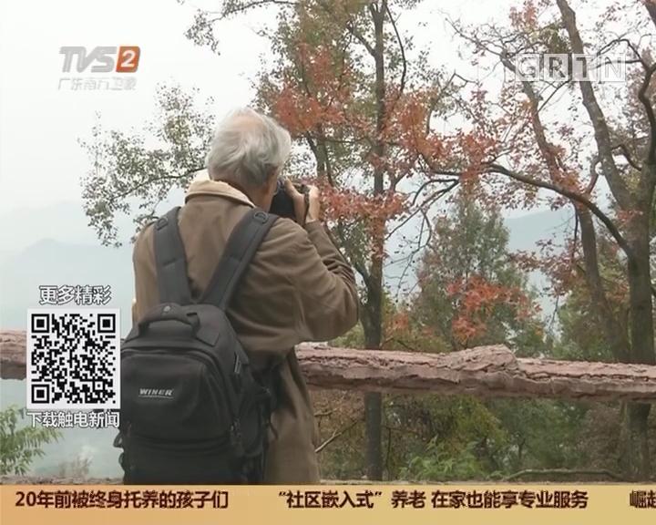 红叶香雪节开幕 广州再添新花景