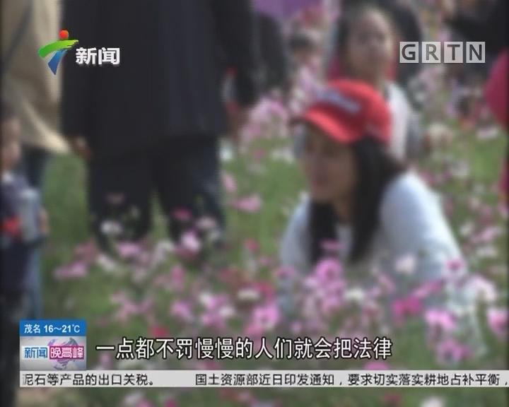 广州:海珠湖美丽花海消失 有人大呼失望