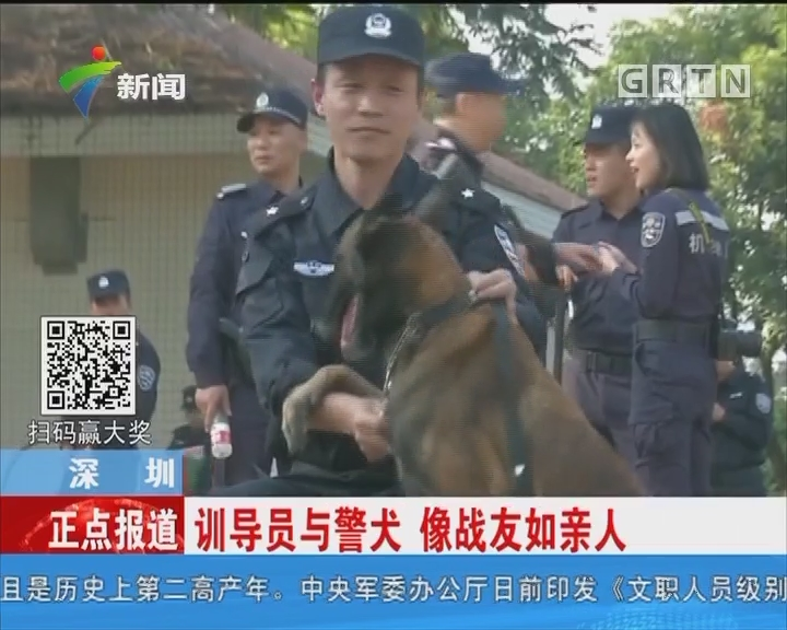 深圳:精英警犬 技能大比拼