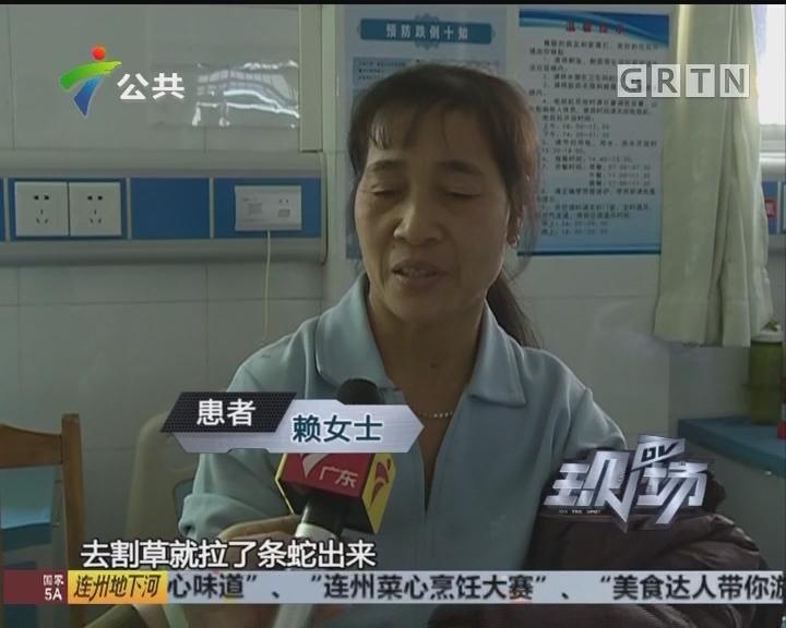 肇庆:其后反复蛇类频出没 多人被咬伤