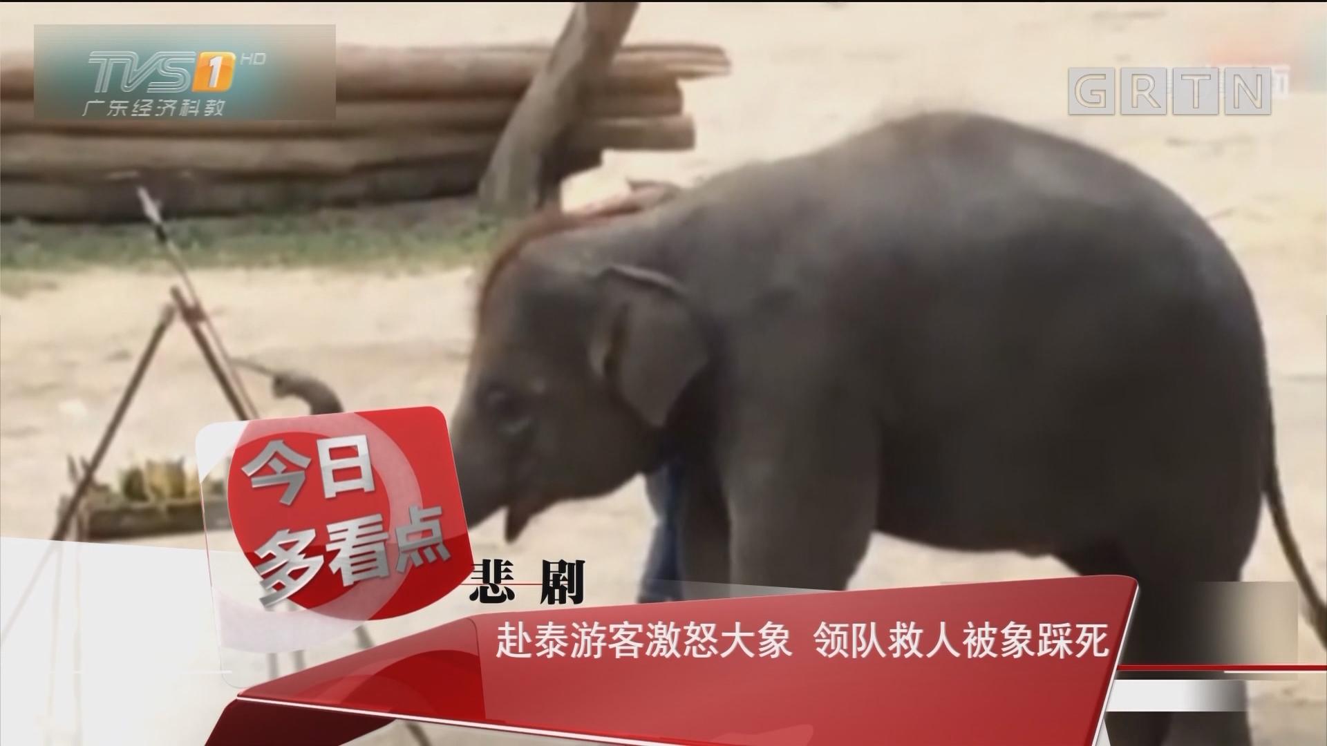 悲剧:赴泰游客激怒大象 领队救人被象踩死