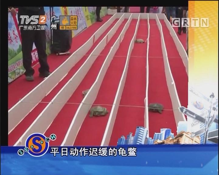 """""""龟鳖赛跑""""引万人空巷"""