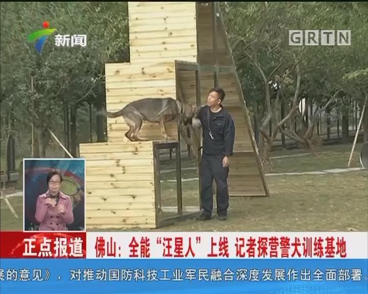 """佛山:全能""""汪星人""""上线 记者探营警犬训练基地"""