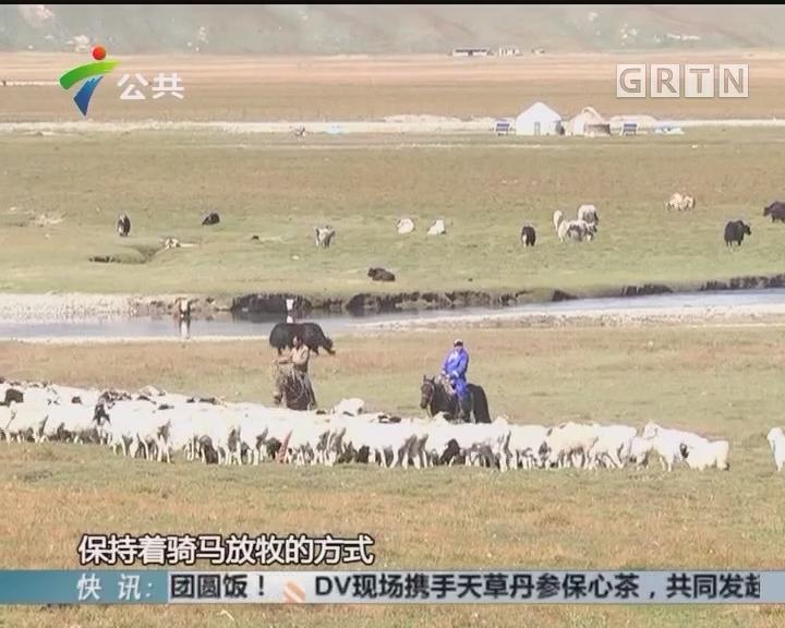 """巴音布鲁克草原 生活在天堂的""""黑头羊"""""""