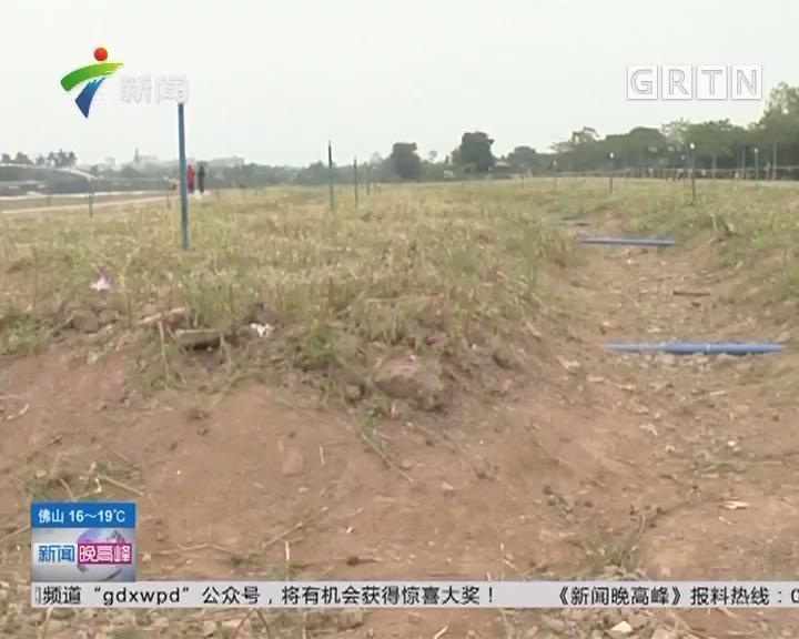 """广州海珠湖:""""花海""""变""""荒漠"""" 只剩凋零花朵"""