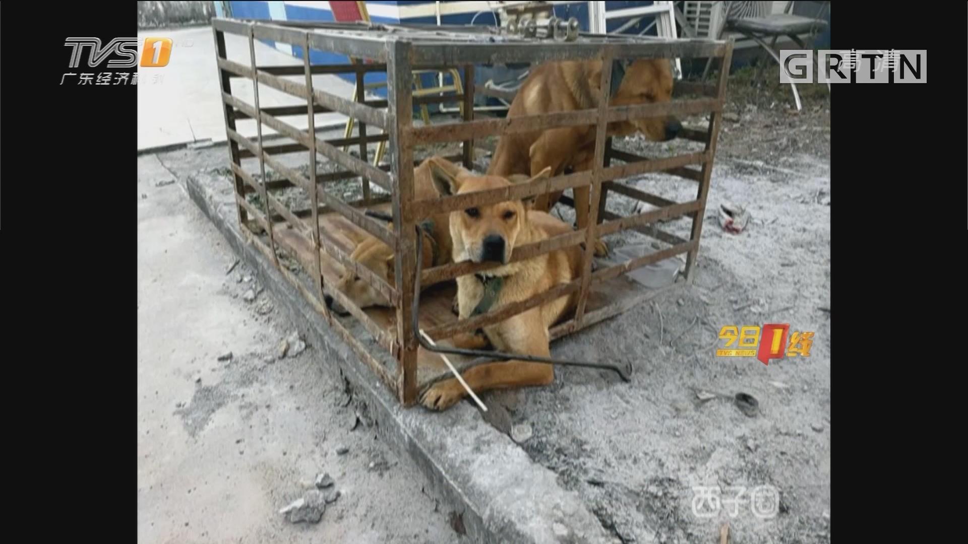 惠州:狗只频频被盗 警方立案调查
