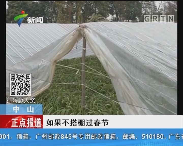 中山:种养户为蔬菜虾苗搭防寒棚