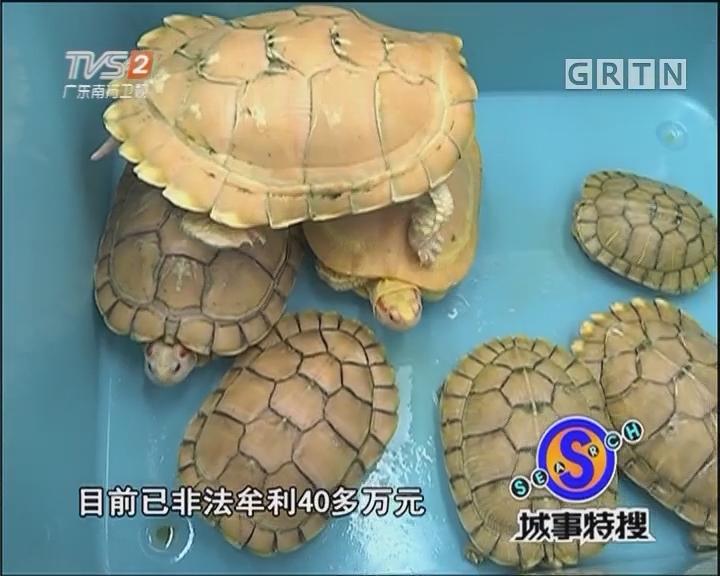 百万宠物龟被盗案告破