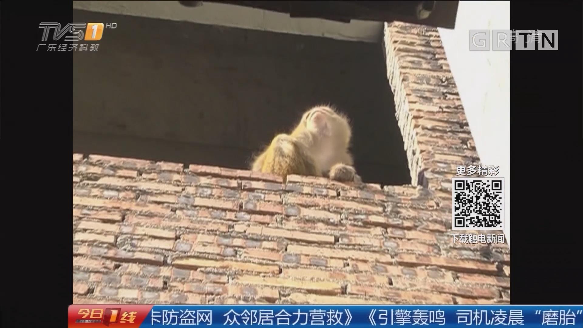 """广州从化:世界这么大 """"猴哥""""想去看一看!"""