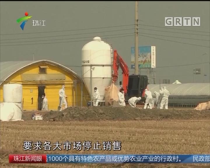 韩国因禽流感紧急扑杀20万只家禽