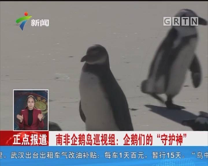 """南非企鹅岛巡视组:企鹅们的""""守护神"""""""