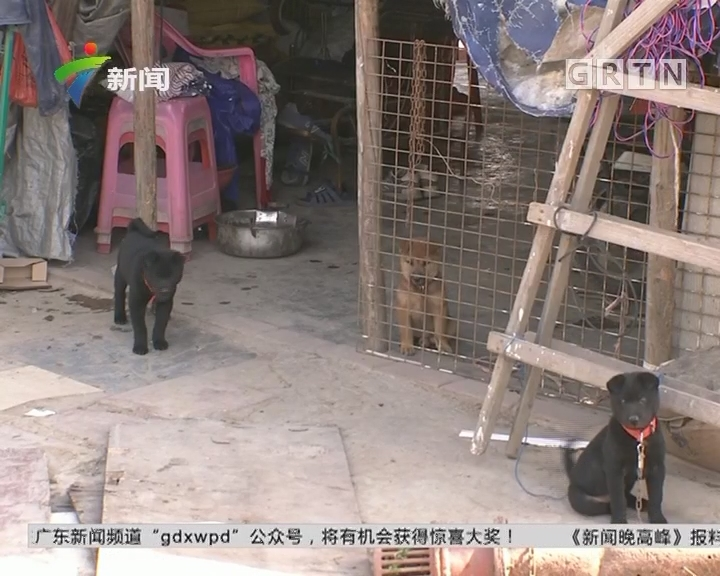 顺德:鱼塘犬只频失踪 民警布控擒贼