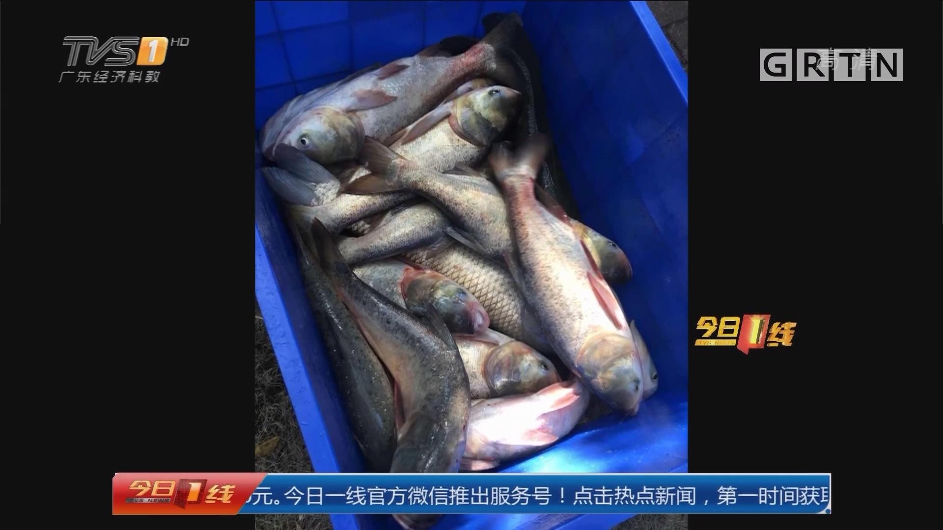 """广州花都:校内""""特产""""鱼 学生免费吃"""