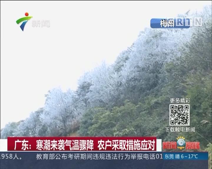 广东:寒潮来袭气温骤降 农户采取措施应对