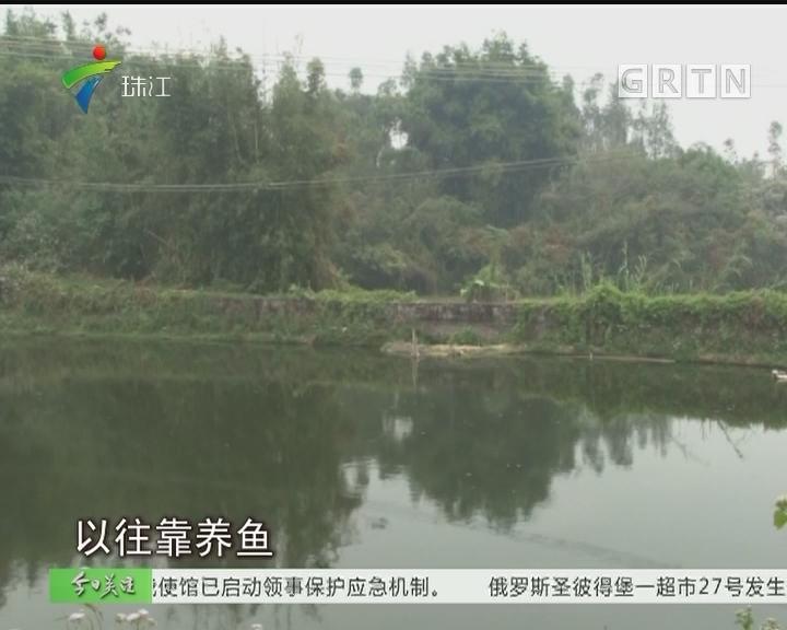 阳江:修渠损坏塘基 村民难养鱼损失大